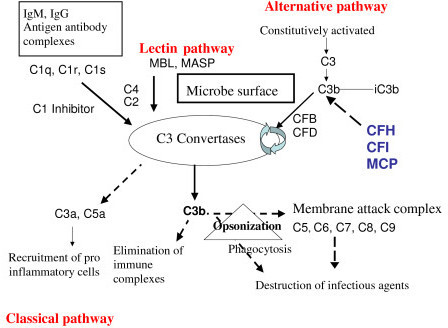 complement-pathway